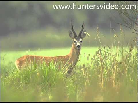 Summer Bucks - Hunters Video