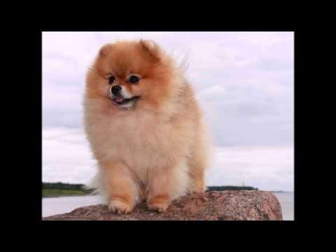 Самые красивые породы собак в мире с фотографиями