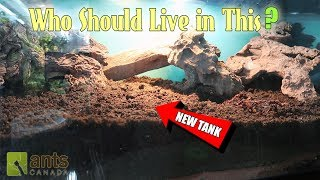 """Click here to SUBSCRIBE: https://goo.gl/tlCQJZWhich of our ant colonies should move into this huge tank! Please kindly vote and let's make this new ant home an epic one!Visit us at http://www.antscanada.com CLOSE CAPTIONING """"CC"""" available for this video. Please feel free to contribute to translating/CCing this video into another language: http://www.youtube.com/timedtext_cs_panel?tab=2&c=UCONd1SNf3_QqjzjCVsURNuAA brand new video is uploaded on this channel every Saturday at 8AM EST (with frequent bonus videos) so be sure to SUBSCRIBE to the channel to catch every ant video we release! Thank you for the support.▶▶▶We've got new Ant T-shirts! Check them out here: https://goo.gl/PjnB7t▶▶▶Got a question about ants or AntsCanada? Visit our website FAQ: https://goo.gl/mJPEqn▶▶▶Want an ant farm? Check out our ant shop. We ship worldwide: http://goo.gl/I4l7Ho ▶▶▶Need to buy an ant colony for your ant farm, or do you have ant colonies to sell/give away? Find out more about our GAN Project: http://goo.gl/jzo9LcClick here to watch every video we have ever made: https://goo.gl/8zNkImFire Ant (Solenopsis geminata) playlist: https://goo.gl/Dlu7PZBlack Crazy Ant (Paratrechina longicornis) playlist: https://goo.gl/FsKLzKYellow Crazy Ant (Anoplolepis gracillipes) playlist: https://goo.gl/ZQCCUwAnts REACT Series & Other Time Lapse Video playlist: https://goo.gl/BVuLeAAntsCanada Tutorial Playlist: https://goo.gl/8dQnwbJoin us at the new AntsCanada Ant Forum: http://forum.antscanada.com▶AntsCanada Official Website http://www.antscanada.com▶Like us on http://facebook.com/antscanada ▶Follow us on http://twitter.com/antscanada▶Follow us on http://www.instagram.com/antscanadaEmail us at info@antscanada.com for any questions or inquiries.About AntsCanada.com: We believe ants are the most amazing creatures on the planet, and every new discovery about their micro world gives us some profound insights into the world around us and ourselves. Bringing the ant farm and love of ant keeping to a wh"""