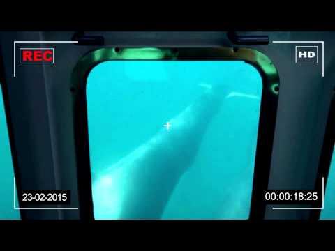 Vídeo:Avistaje de ballenas en Puerto Madryn desde una embarcación semisumergible