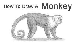 Видео: рисуем обезьяну карандашом