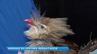 Zoológico de Sorocaba recebe cerca de 400 animais machucados por ano para tratamento