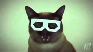 DUBSTEP CAT!!!