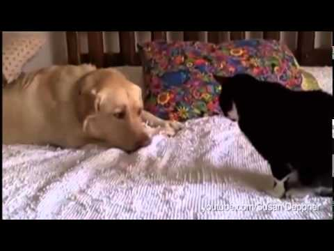 Kad psi pokušavaju da budu prijatelji sa mačkama