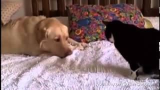 Ten pies za wszelką cenę chce zakumplować się z kotem. W 40 sekundzie pękłam ze śmiechu!