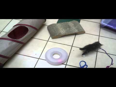 Pet Tips – Kitten Behavior Training