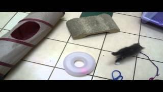 Pet Tips - Kitten Behavior Training