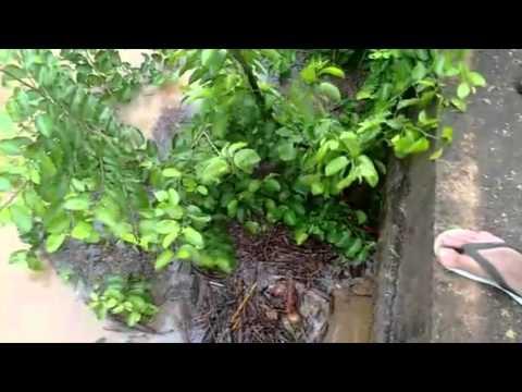 São João do Iracema - Vídeo mostra água bem próxima da ponte, estado de alerta.