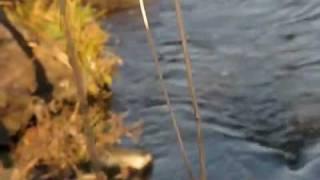 Video Řeka (2007)