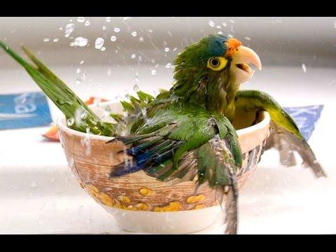 una simpatica compilation di pappagalli