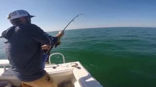 Anna Maria Island Tarpon Fishing // Tarpon Season is approaching!