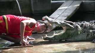 Crocodile Show At Koh Samui -Thailand (HD)