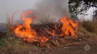 Após queimadas, cresce número de animais silvestres na área urbana em Marília