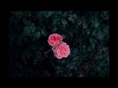 một đêm say (X) / a piano ver / a live recording - Thời lượng: 3 phút, 31 giây.