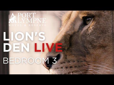 Lion Den Cam - Bedroom 3