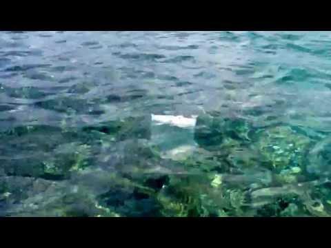 come pescare con un sacchetto di plastica e un po' di pane