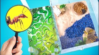 5 Tips to Make Your Ants Happy   Building a New Ant Farm!