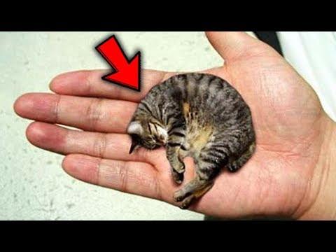 Top 10 Pets YOU WON'T BELIEVE EXIST!