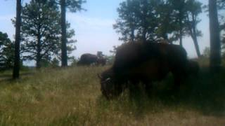 Rapid City (SD) United States  city pictures gallery : Bear Country USA, Rapid City, South Dakota