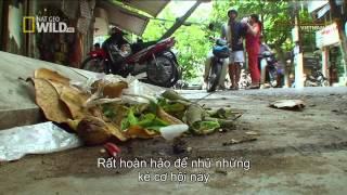 Khám Phá Hoang Dã Việt Nam