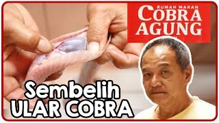 Video Cobra Agung Restaurant. The process of snoring Cobra Snakes to skin for consumption. MP3, 3GP, MP4, WEBM, AVI, FLV Januari 2019