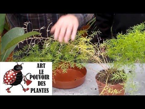 comment soigner les plantes d'intérieur