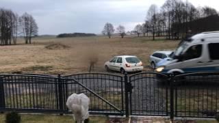Kierowca z 2,3 promila kontra 3 policjantów! Ucieczka przez pola pod Gorzowem!