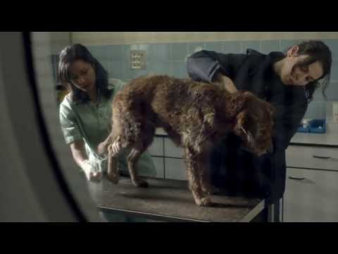 Pedigree 2013 Feeding Brighter Futures Ad: Bad Dog, Good Dog