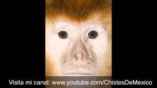 El chiste del mono hablando del leon feo