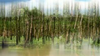 THƯƠNG LẮM CÀ MAU - Sáng tác: Phượng Vũ - Tiếng hát: Hương Lan