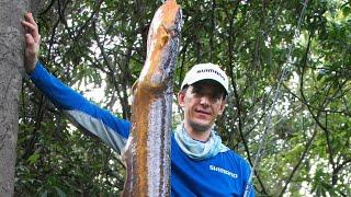 Una electrificante captura en el Amazonas realiza Alejandro Linares
