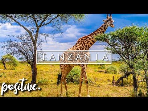 MY VISIT TO TANZANIA (Serengeti & Zanzibar)   Dave Cad