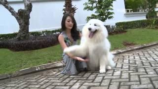 Entertainment News - Keith Agustine berbagi cara merawat anjing peliharaannya