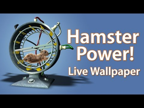 Video of Hamster Power! Live Wallpaper