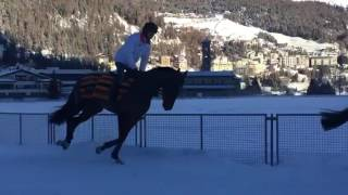 Loved taking video of the horses working in snow out in St Moritz