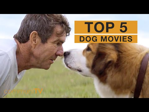 TOP 5: Dog Movies   Trailer