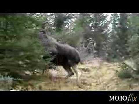 Holy Big Moose - Just wait for it