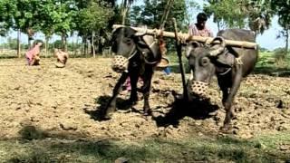 Vidéo JMA 2008: S'adapter au changement climatique au Bangladesh