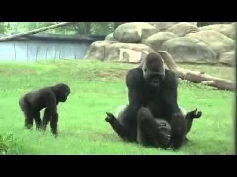 Odia Sexy In Love At Baranga Zoo