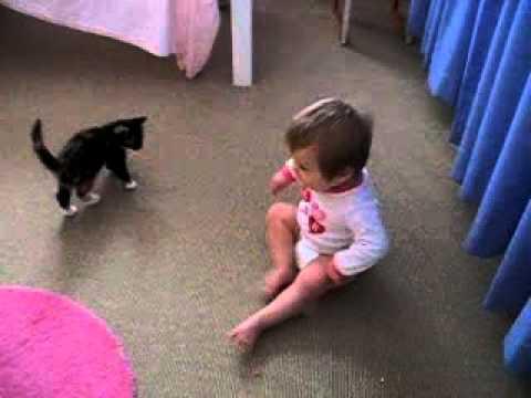 0 Video de un bebe y un gatito jugando