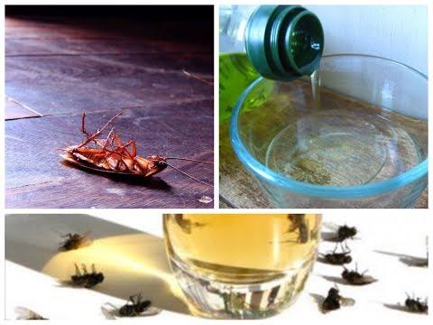Coloque isto em sua casa e em 1 hora nao havera mais nenhuma barata, mosca ou mosquito!