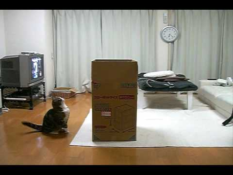 Maru And The Big Box