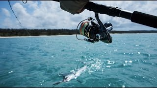 Hervey Bay Australia  city pictures gallery : Hervey Bay Black Marlin - SHIMANO AUSTRALIA FISHING