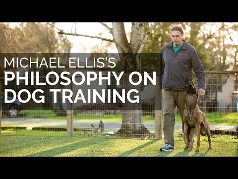 dog training - Michael Ellis is the best dog training instructor I have met since going to my first Schutzhund seminar in 1974. Michael lives near San Francisco where he op...
