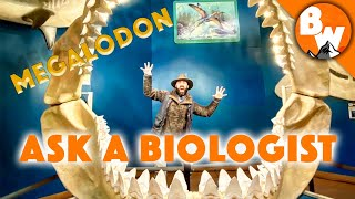 ASK a BIOLOGIST - Lesson 107: Megalodon by Brave Wilderness