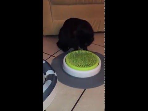 Catit Jardin d'Herbe à Chat