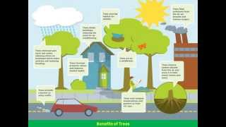 Benefits of Trees: Social, Communal, Environmental, Economic