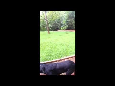 CT DOG CARMO( Basty e Pedro) Patos de Minas