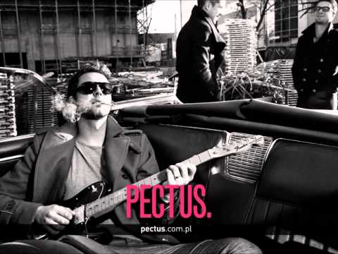 Tekst piosenki Pectus - Dla Ciebie po polsku