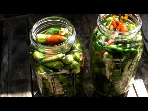pickeled - I made some homemade pickled okra. Added habanero peppers for a fire flavor... Here's the recipe: GARLIC OKRA PICKLES 3 lbs. fresh whole okra pods, 3 to 4 in...